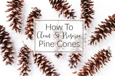 how to preserve pinecones best 28 how to prepare preserve pine urbane the