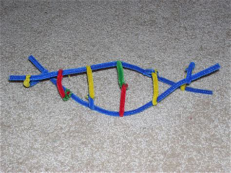 dna model using pipe cleaners and davison dna structure and replication