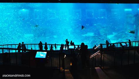 sea aquarium marine park sentosa