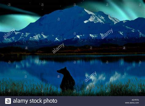 mt lights briwn mt mckinley northern lights denali np alaska