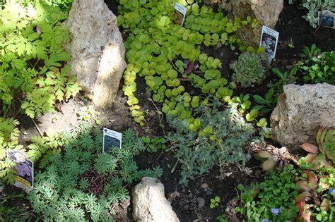 rock garden plants for shade shaded rock garden ideas
