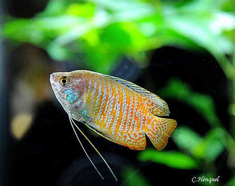 les poissons d eau chaude coll 232 ge gilles de gouberville