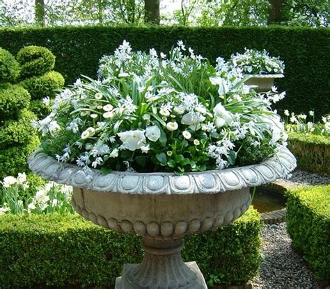 white flower gardens simple container filled with blooming white bulbs