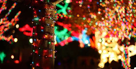 colorful lights colorful lights wrapped around the tree pictures photos