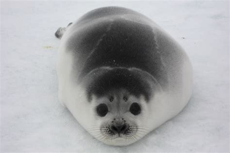 seal ribbon baby ribbon seal images