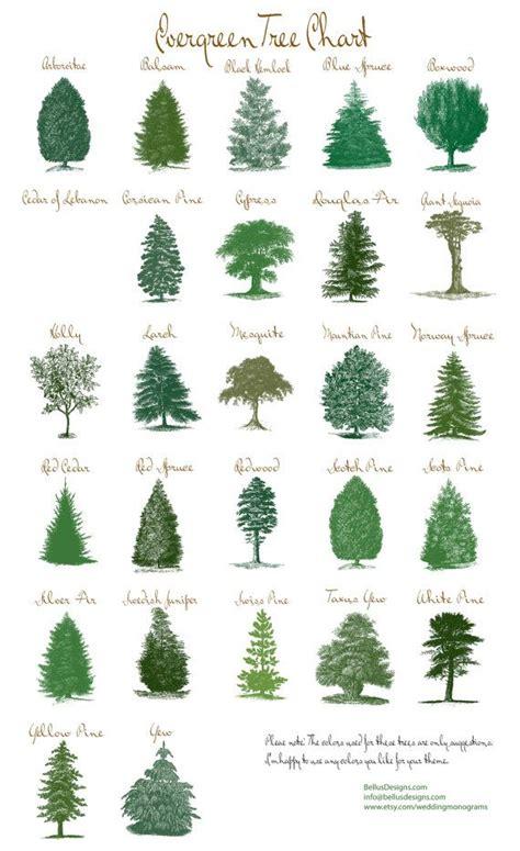 popular types of trees best 25 evergreen ideas on gnome desktop