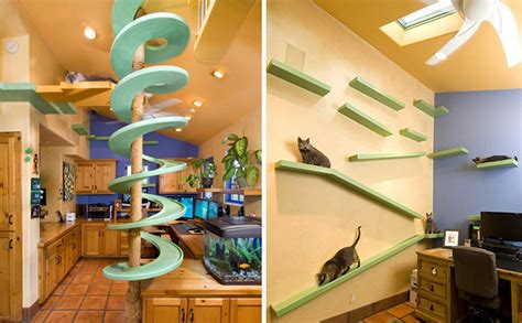cat paradise with 18 cats spends 35 000 on turning his home into a