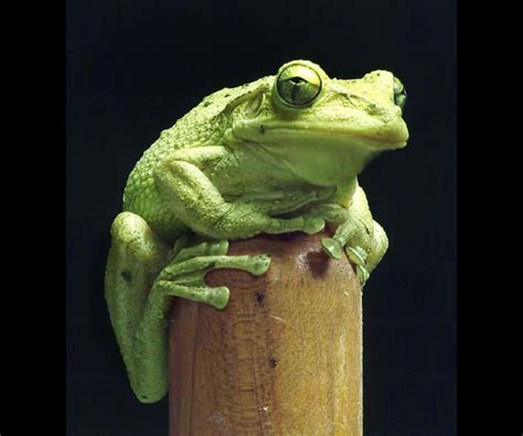 tree frog woodworking rudolph wood turning photography gallery 1