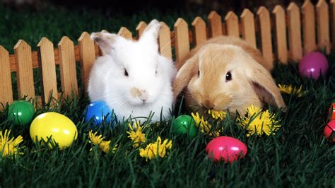for easter easter bunnies and eggs wallpaper 817351