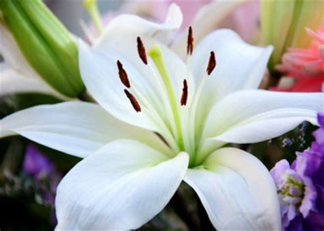 beautiful flowers names and pictures top 10 flower names photos babycentre uk