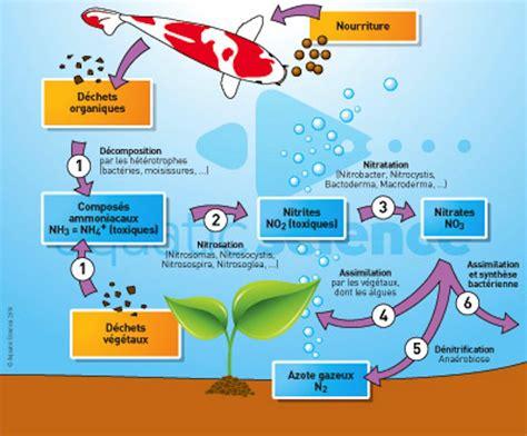 bassin et ko 239 steph46 informations le cycle de l azote