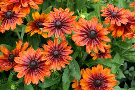 flowers garden pictures file garden of flowers 5982172940 jpg wikimedia commons