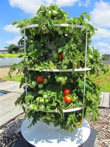 Gardeners Supply Tomato Tower 1000 Images About Aeroponics Tower Garden On