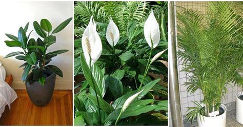 mejores plantas de interior mejores plantas de interior facilisimo