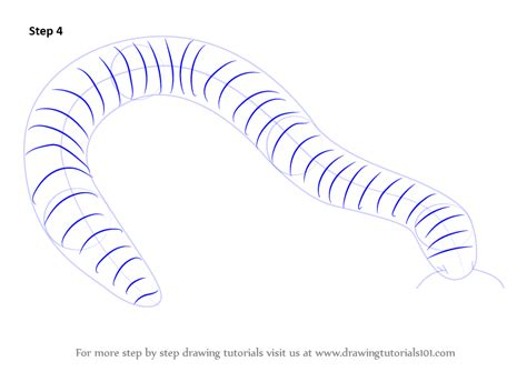 how to drow learn how to draw a millipede worms step by step