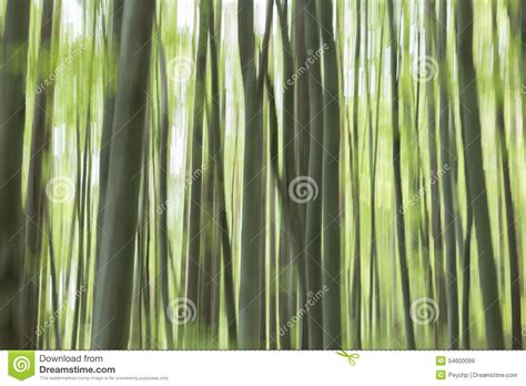 pan trees vertical pan of trees abstract forest stock photo