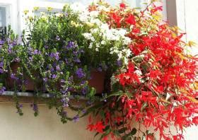 Blumenkübel Bepflanzen Vorschläge by Sommerbepflanzung Balkon Balkonbepflanzung Im Sommer