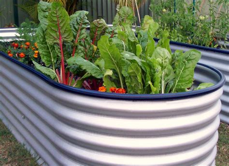 when to water vegetable garden joey s place my water tank raised vegetable garden beds