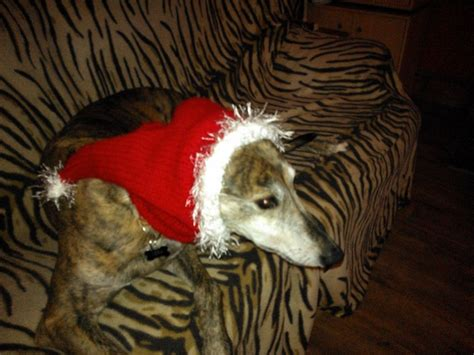 greyhound knitted hat pattern 23 best images about greyhound snoods on