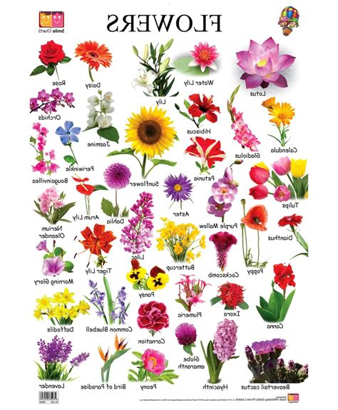 beautiful flowers names and pictures different types flowers pictures names beautiful