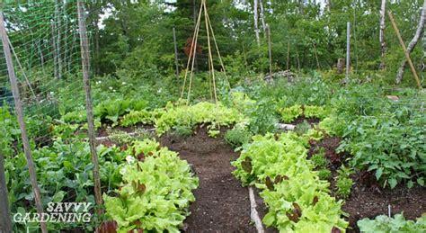 high yield vegetable garden 6 high yield vegetables