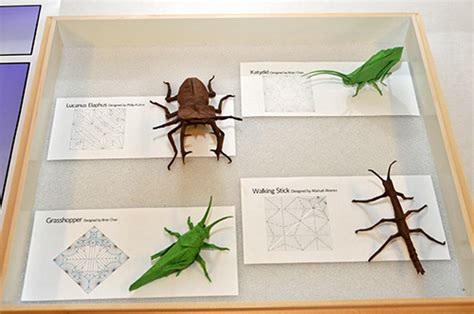 origami insect outreach update entomology purdue 2011