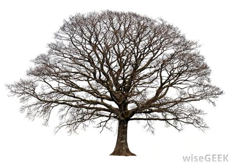 tree pic what are deciduous trees with pictures