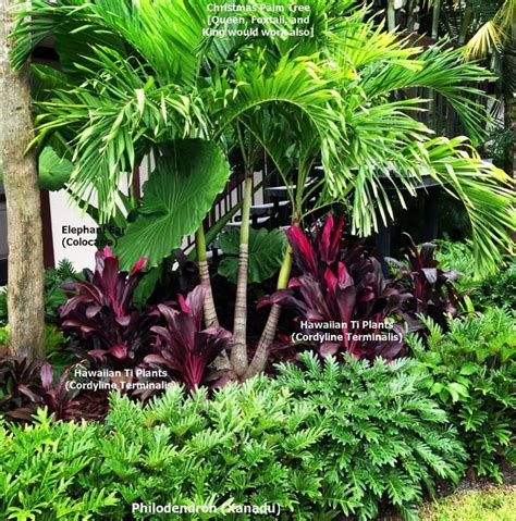 tropical landscaping ideas best 25 tropical landscaping ideas on