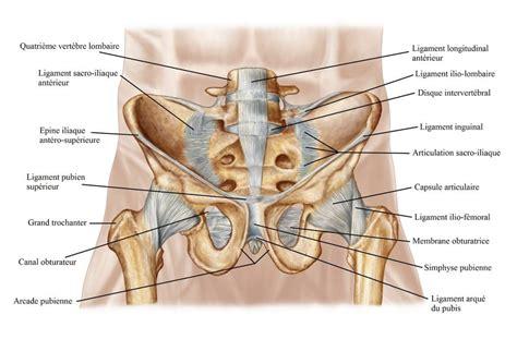 douleur pendant la grossesse au ventre musculaire ou ligamentaire