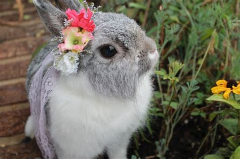 flower and bunny bunny with flowers