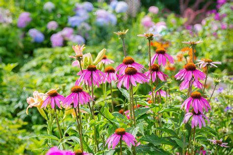 garden flowers perennials easiest perennials to grow how to an easy garden
