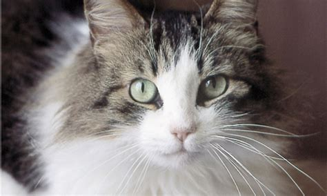 cat for adults why cats make great adoption pets the animal
