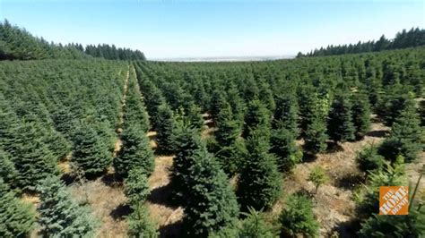 tree farms nearby the home depot local farms to nearby lots the of a