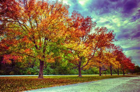 tree pic autumn tree line at busch photograph by bill tiepelman