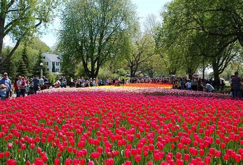 festival canada things to do at the canadian tulip festival 2017