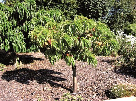 fruit trees produced by waimea nurseries