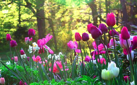 green garden flowers blogues 194 187 flower garden 194 187 ma plan 232 te pps diaporama