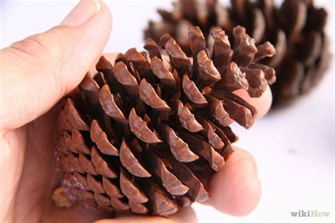 how to preserve pinecones preserve pinecones preserve cleanses and pine cones