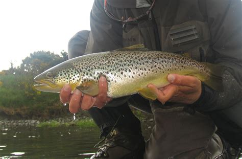 fishing trout trout fishing kirkwood real farm holidays