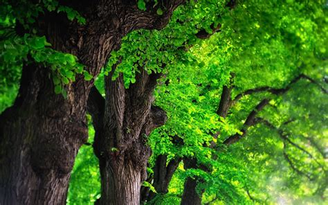 3d tree wallpaper tree backgrounds image wallpaper cave