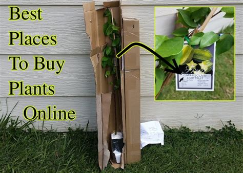 best place to buy best places to buy plants seeds