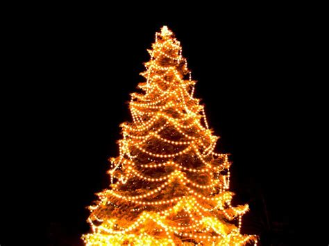 hang tree lights visihow
