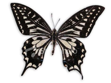 kupu kupu kupu kupu by rechino on deviantart