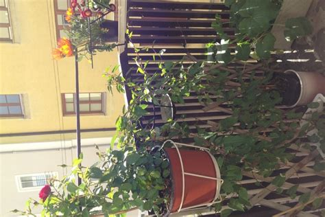 Englischer Garten München Wc by Unterkunft Appartement Am Englischen Garten Wohnung In
