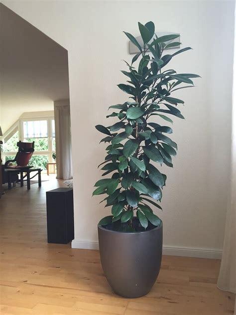 Der Neue Garten Ratgeber der neue trend blumenk 252 bel aus fiberglas garten