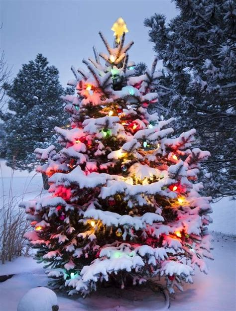 outdoor tree decorating ideas tree tree s collection for 2013