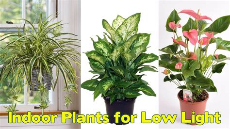 Plants Low Light 25 indoor plants for low light youtube