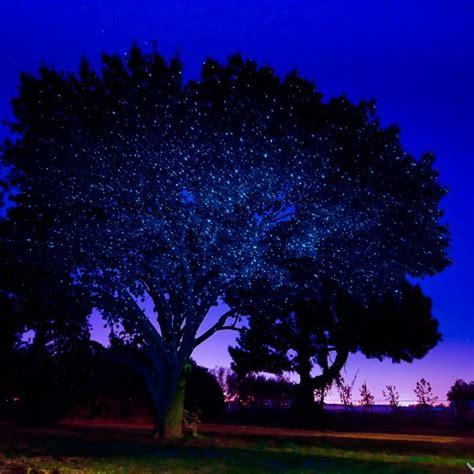 outdoor lights for sale outdoor laser lights for sale decor ideasdecor ideas