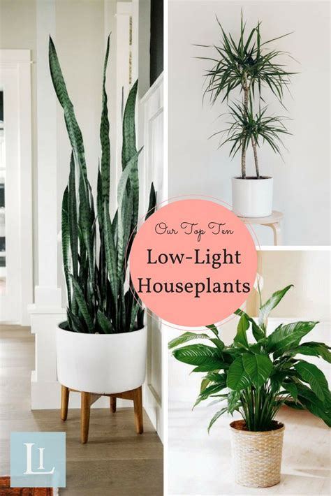 inside house plants best 25 living room plants ideas on plants