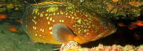 restaurante el parque cabo de gata el ecosistema marino del cabo de gata 183 parque natural